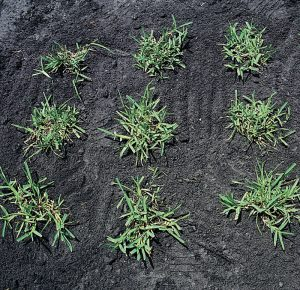 cr_planting_plugs2