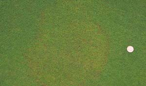 Photo by Dr. Van Cline, Agronomist, The Toro Company.