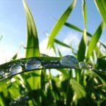 cool-season-grasses-lg