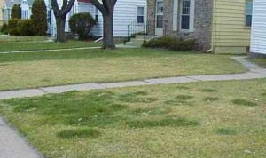 Is It Really Lawn Disease? - Yard Care