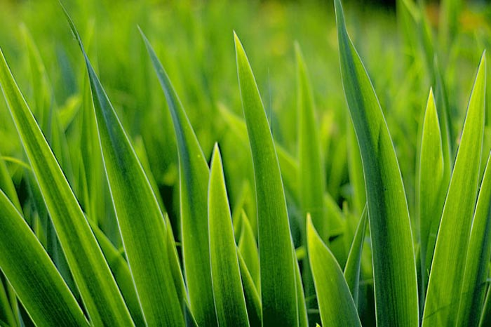 Bright healthy green grass