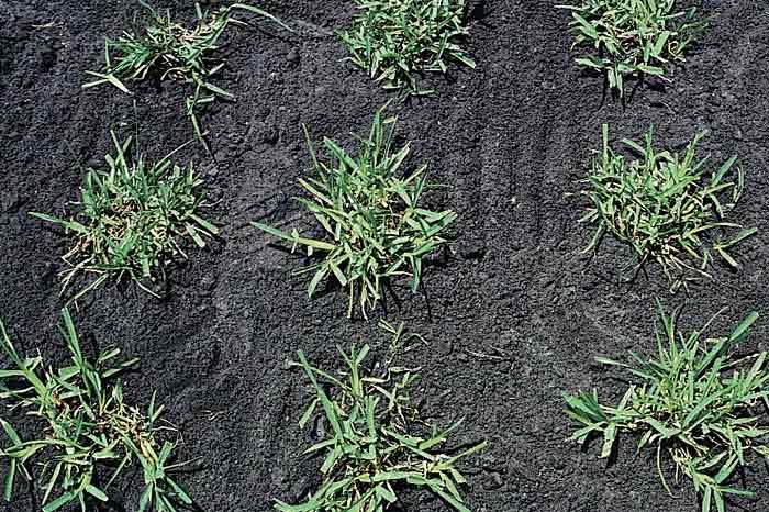 Warm Season Grasses Choose The Right Grass Yard Care