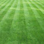 grassisgreener