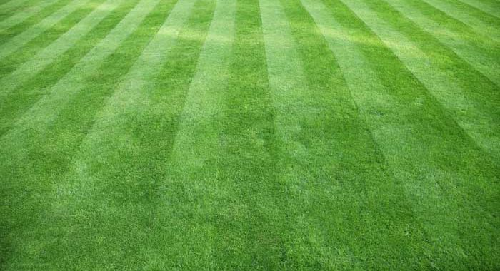 Freshly cut grass with lawn striping