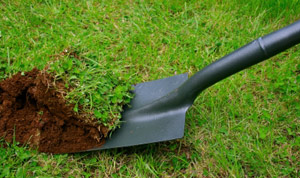 By lifting a section of sod once per season, you will get a good look at what is feeding on your lawn.