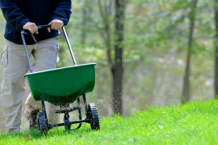 Man pushing green fertilizer tool over grass