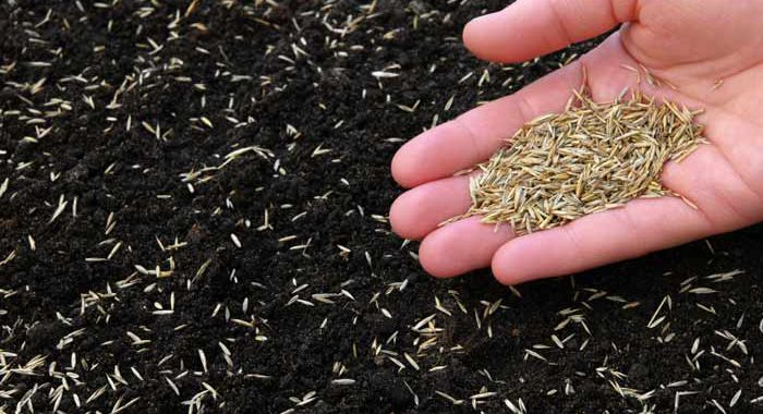 Seeds scattered in soil with hand holding more seeds