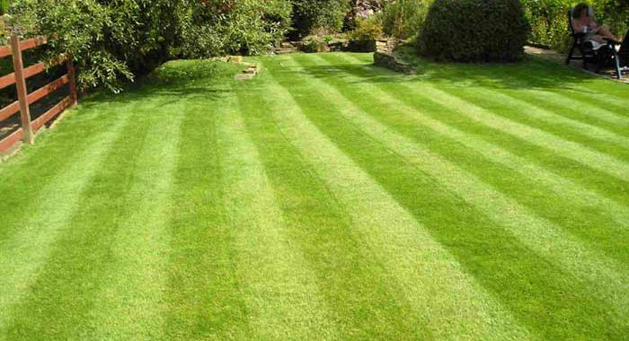 Spring through fall lawn diseases