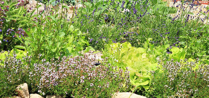 Create a Garden to Attract Beneficial Insects