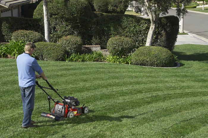 Man using Toro push lawn mower to make lawn stripes in yard