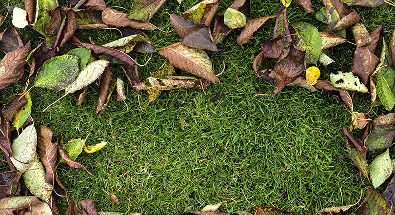 Fall Lawn Care Schedule