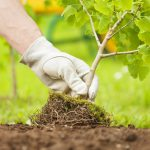 Ways to Save Water: Best Practices for Watering Trees