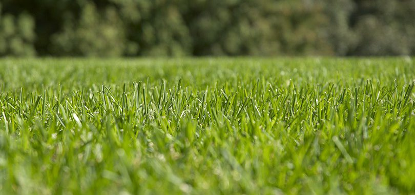 Closeup of green grass cut by a sharp mower blade