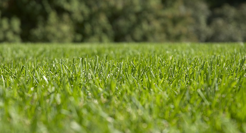 The Benefits of Sharp Mower Blades