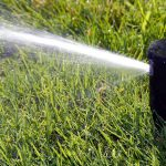 Guide to Saving Water and Your Lawn