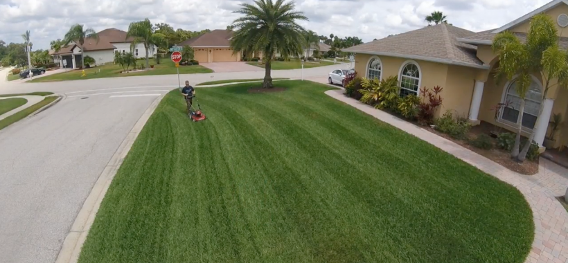 Front yard grass mowed with lawn striping technique, palm tree and man with push lawn mower