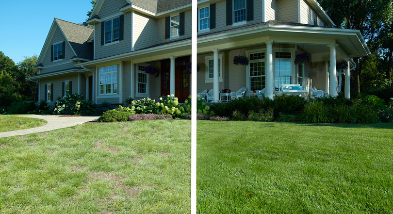 Lawn shown with before and after. Dead, tired lawn on left, with the green, restored lawn on the right.