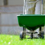 Man pushes broadcast spreader across lawn as it distributes fertilizer.